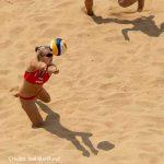 Olimpiadi giovanili, beach volley: argento per Scampoli/Bertozzi
